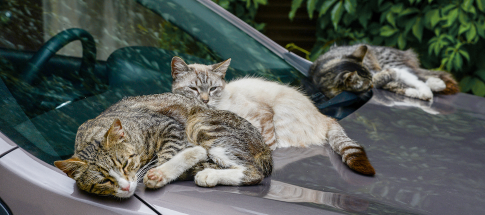 Aracımızın etrafında gezinen minik dostlarımıza dikkat!